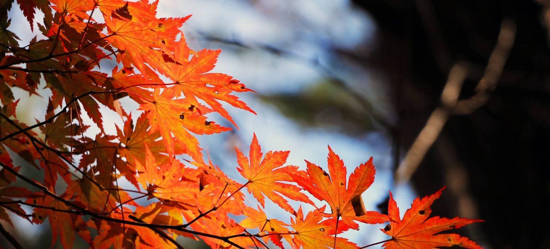 Kinderyoga im Herbst